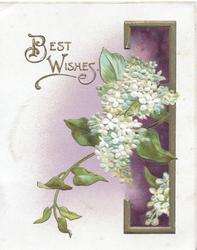 BEST WISHES in gilt left, white lilac, gilt & purple design right