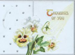 THOUGHTS OF YOU top right, white/yellow/brown pansies, stars in background left