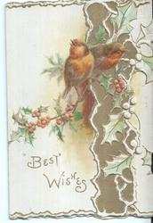 BEST WISHES, two robins perched on holly branches