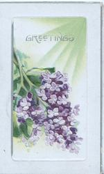 GREETINGS in gilt above purple lilac, sunny background