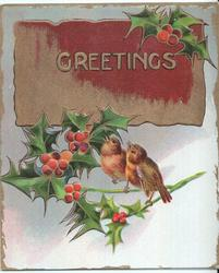 GREETINGS in gilt, two robins perched on branches of holly