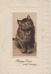 HAPPY DAYS AND MANY inset black kitten sits facing front