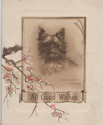 ALL GOOD WISHES below YORKSHIRE TERRIER in gilt bordered inset, cherry blossom left
