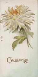 GREETINGS in gilt below white/orange chrysanthemums