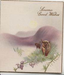 SINCERE GOOD WISHES in gilt above purple hills & lochs, behind 2 highland cows, one in water, heather below