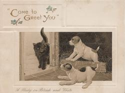 """""""COME TO GREET YOU"""" 2 white & brown puppies bark at black kitten coming through door"""