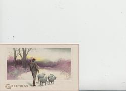 GREETINGS in gilt inset of 4 sheep driven away on snowy road