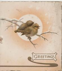 GREETINGS in gilt on white plaque below 2 birds of happiness. perhaps English robins, facing right & perched on twig in front of winter sun
