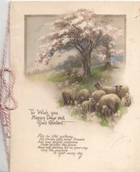 TO WISH YOU HAPPY DAYS AND GLAD CONTENT sheep & lambs on grass below blossom tree verse...