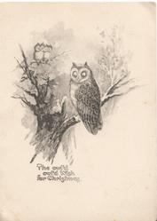 THE OWL'D OWL'D WISH FOR CHRISTMAS , 3 owls perched in snowy tree