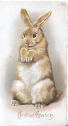 CHRISTMAS GREETINGS below rabbit sitting up begging