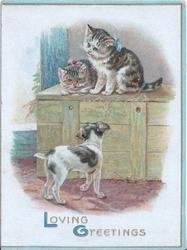 LOVING GREETINGS(L &G illuminated 2 kittens on ledge in stable look down at terrier puppy