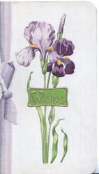 WISHES in gilt on green plaque in front of purple iris