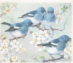 no front title, 4 bluebirds of happiness perched among apple blossom