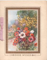 GOOD WISHES brown bordered floral inset, red & pink anemones, rural background