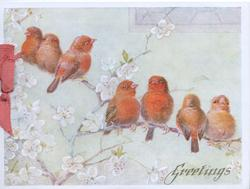 GREETINGS in gilt below 7 red tanagers perched among blossom