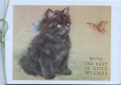 WITH THE BEST OF GOOD WISHES seated black kitten facing half right, butterfly
