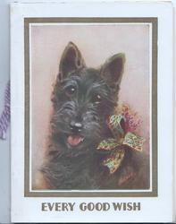EVERY GOOD WISH in gilt below head & sholders study of black cotch terrier