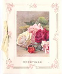 GREETINGS 5 roses inset with decorative rose border, yellow ribbon left