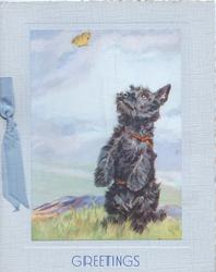 GREETINGS in blue below black Scotch terrier sitting up watching yellow butterfly