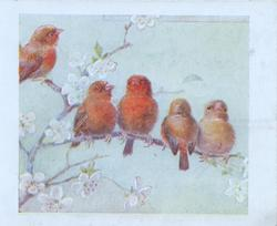 no front title. 5 red birds of happiness perched among blossom