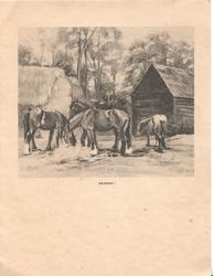 HEYDAY! 4 horses eat hay, hay stacks, barn & trees behind
