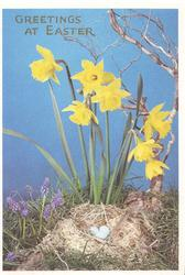 GREETINGS AT EASTER in gilt over daffodils & birds nest with 3 eggs, deep blue sky