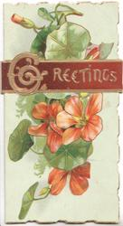 GREETINGS(G illuminated) in gilt on red plaque  above red nasturtiums