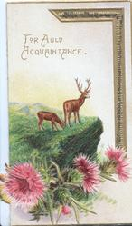 FOR AULD ACQUAINTANCE in gilt above stag & hind on mountainside, purple thistle heads below