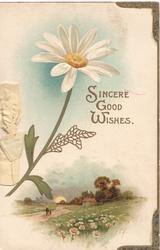 SINCERE GOOD WISHES in gilt, white daisy with yellow centre left, rural scene with daisies below