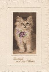 GREETINGS AND BEST WISHES in gilt below inset of standing kitten with purple ribbon round neck