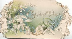 GREETINGS(G illuminated) in  white above snowdrops on green/white background on top flap