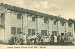 LOADING JAMAICA BLOSSOM BRAND TEA AT FACTORY
