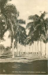 ROYAL PALM AVENUE, SHETTLEWOOD, HANOVER