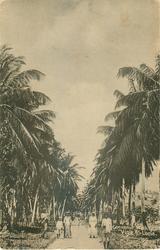 COCOANUT WALK, VIGIE