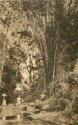 RIVER SCENE, TRINIDAD