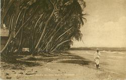 COCO-NUT PALMS, MAYARO BEACH, TRINIDAD