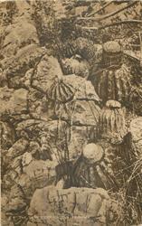 THE TURK'S CAP CACTUS, TRINIDAD