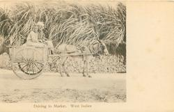 DRIVING TO MARKET, WEST INDIES