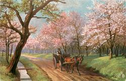 horse & cart come forward along road lined by blossom trees