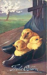 three chicks in shoe
