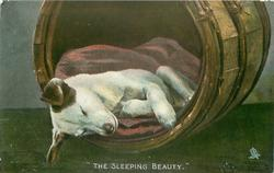 """THE SLEEPING BEAUTY"""