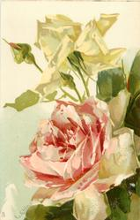 large pink open rose in centre, two bud & yellow rose above, signature lower left