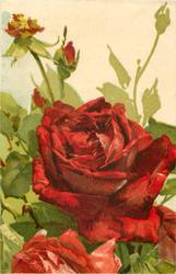 two red roses,with three buds above