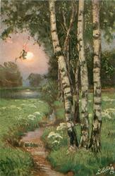 birches right of stream, prominent sun low in sky