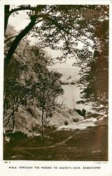 WALK THROUGH THE WOODS TO ANSTEY'S COVE, BABBACOMBE