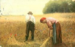 """ZUR ERNTEZEIT"" elderly peasant man & woman harvesting wheat by hand"