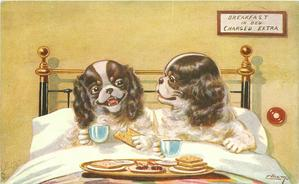 two spaniels