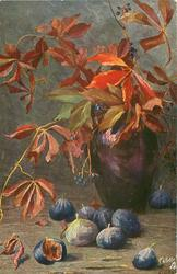 figs on table, brown vase of elderberry, much foliage