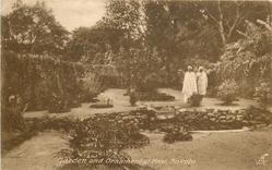 GARDEN AND ORNAMENTAL POOL, SOKOTO